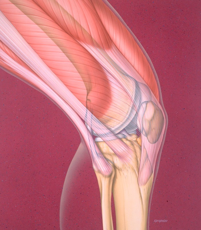 Injury to any of the muscles, bones, or ligaments of the knee can cause severe pain