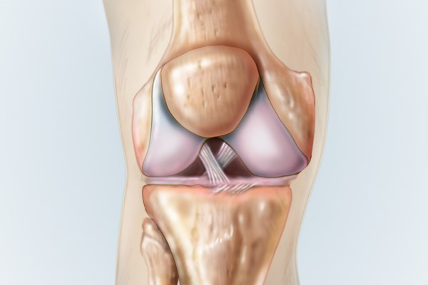 The anterior cruciate ligament (white)  provides rotational stability to the knee.