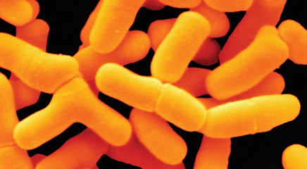 Probiotics ease antibiotic GI side effect