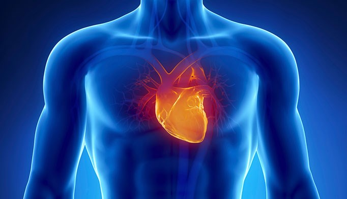 High body fat ups cardiac deaths in older adults