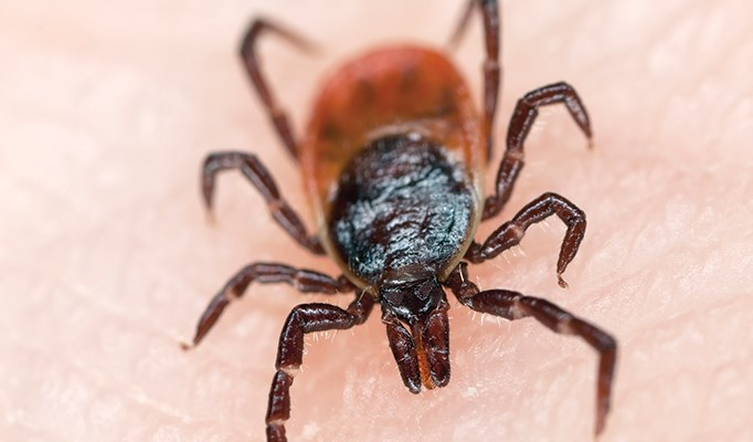 New tickborne illness found in the Northeast