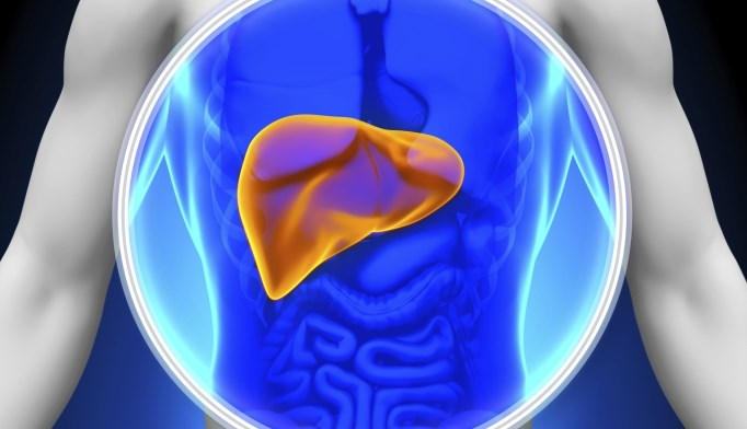 Ezetimibe did reduce liver fat, but it was not clinically significant.