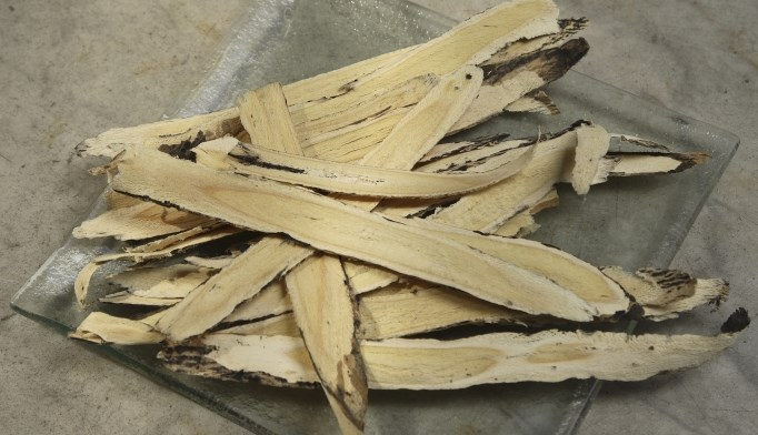 Astragalus may help treat cancer, heart failure