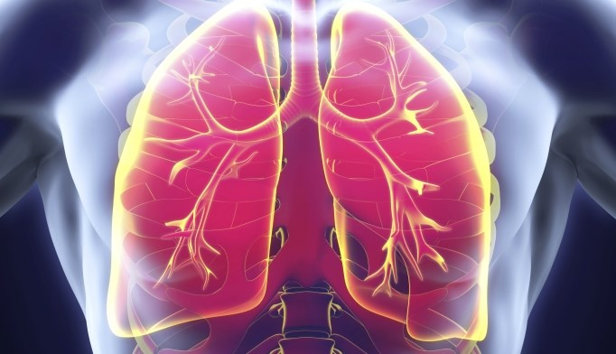 The lung microbiomes in people with and without HIV are very similar.