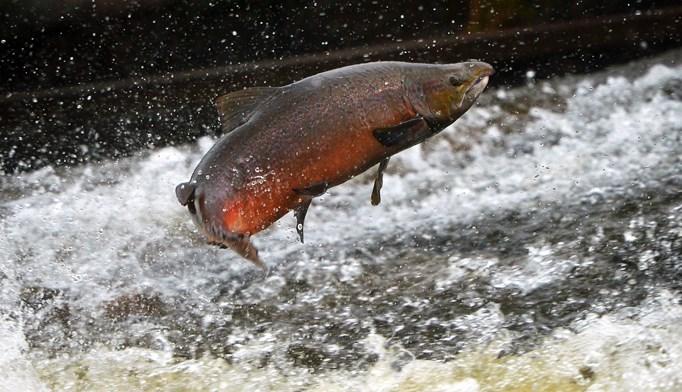 Omega-3 fatty acids are primarily found in fatty fish.
