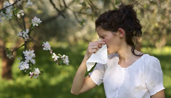 AllerVarx significantly reduced sneezing, rhinorrhea, nasal obstruction, ocular itching, lacrimation, and congestion.