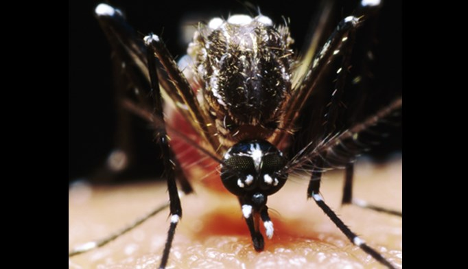 The researchers were able to isolate Zika from the semen sample in a British man recovering from the virus contracted in the Caribbean.