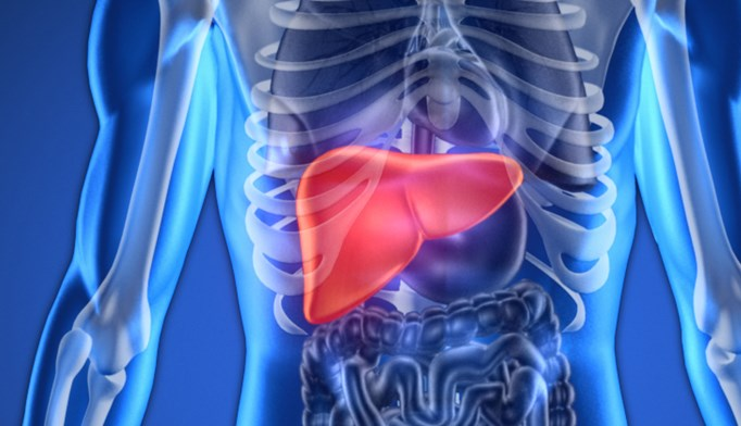The source of a patient's liver transplant did not significantly affect rates of disease recurrence.