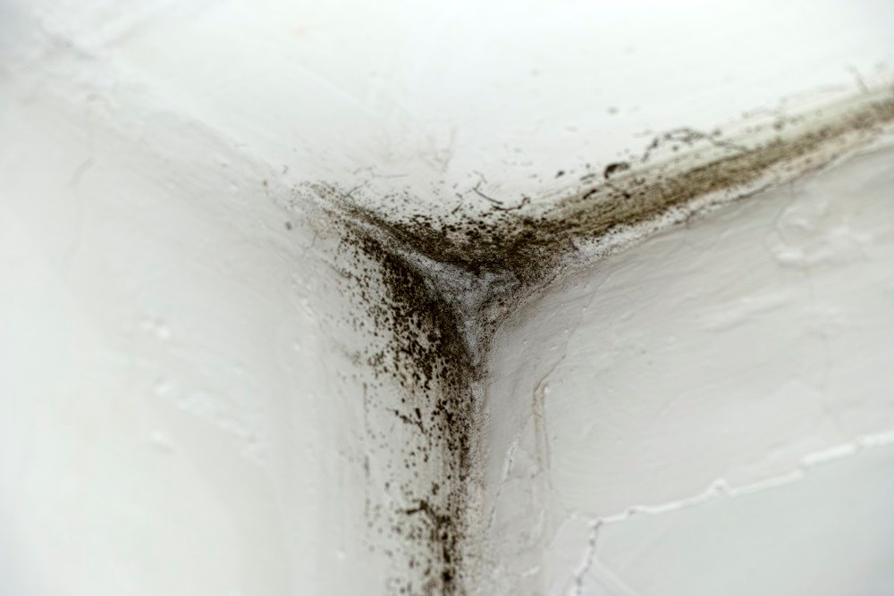 Exposure to mold and dampness during infancy was associated with increased risk of asthma and rhinitis up to 16 years of age.