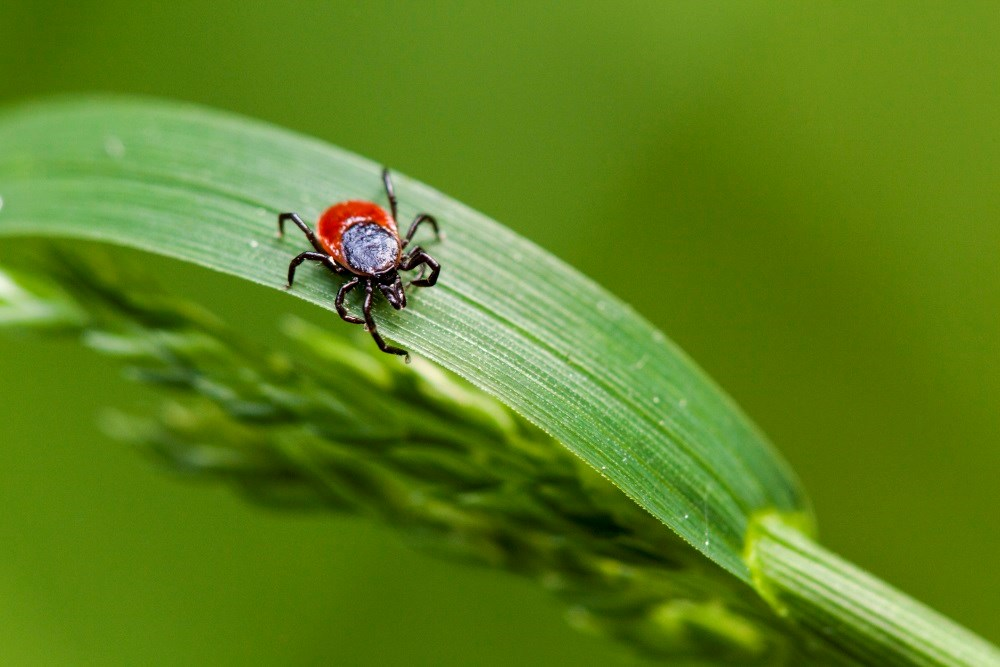 Preventing Lyme disease and tick bites: tips from the CDC