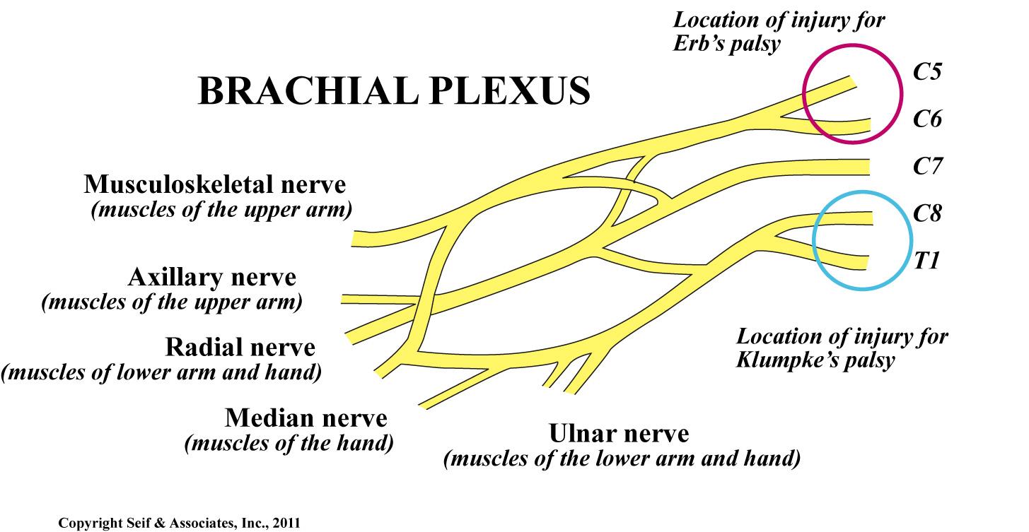 Shoulder Dystocia - The Clinical Advisor