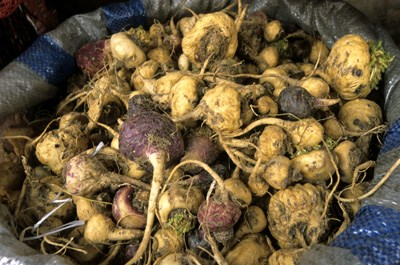 Maca root used to enhance sexual performance