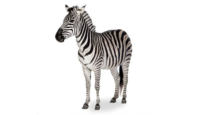 Determining when to consider the 'zebra'