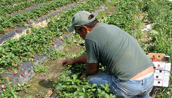 Mobile health strategies useful for migrant workers