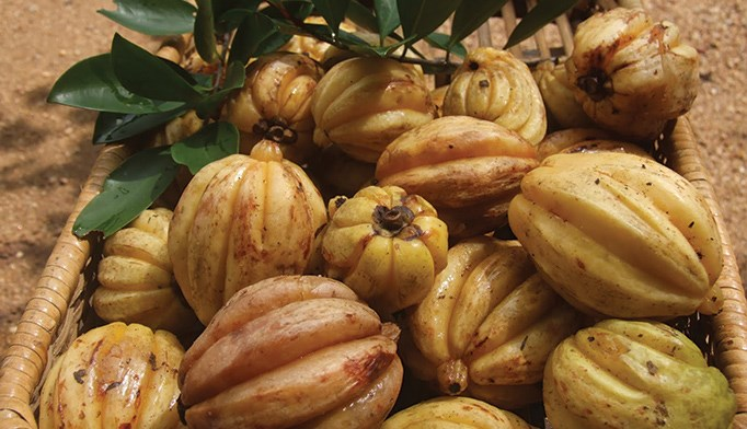 Garcinia cambogia: An answer to obesity?