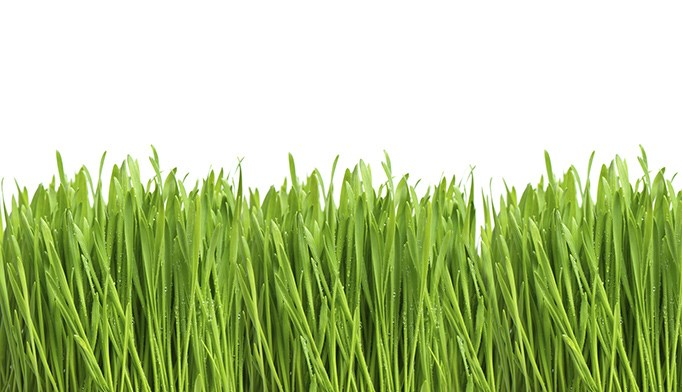 Second oral immunotherapy approved for grass allergies