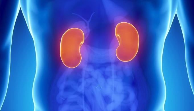 Kidney transplants linked to higher survival rates
