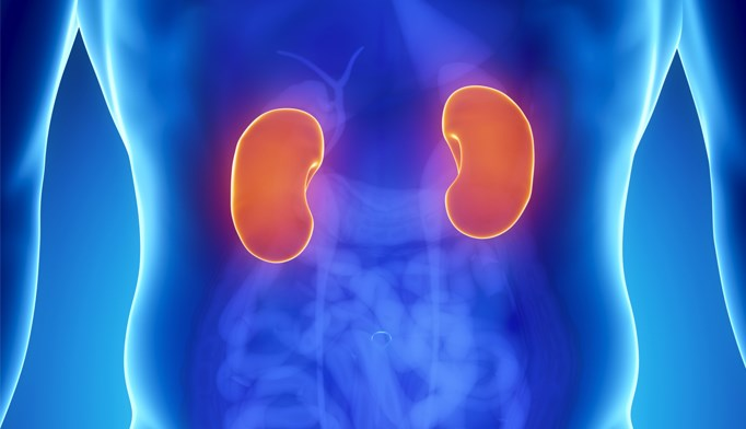 Kidney transplants linked to higher survival rates