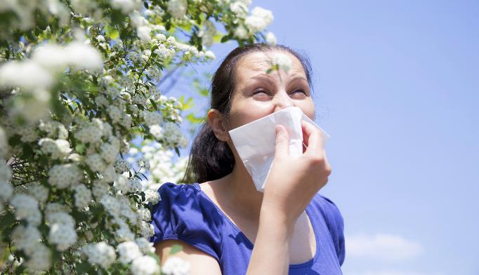 Pollen-derived adenosine key in ragweed allergy