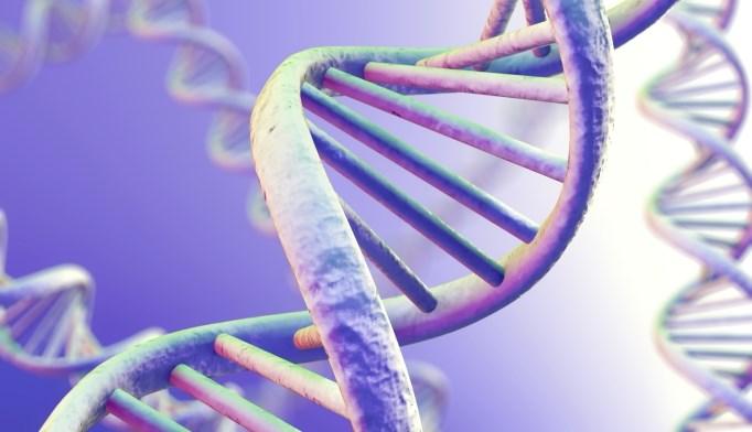 Genetic makeup influences HIV vaccine efficacy