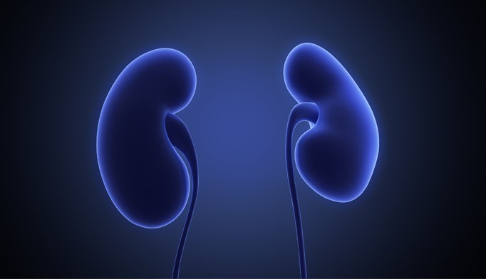 Remaining Kidney Health Most Important Concern for Donors