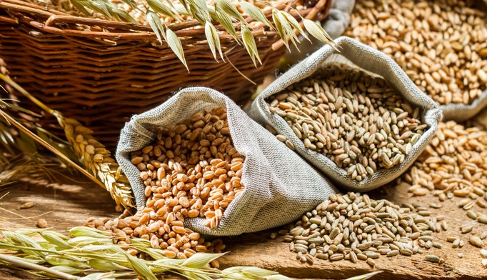 Consuming fiber from bread, cereal, fruits may improve aging process