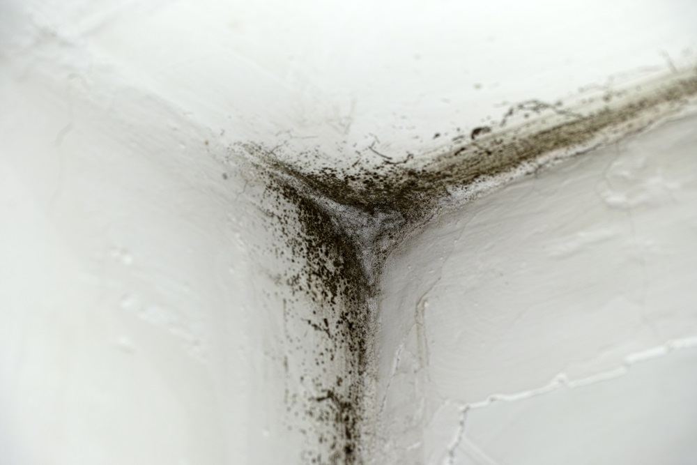 research papers black mold There is no practical way to eliminate all mold and mold spores in the indoor environment the way to control indoor mold growth is to control moisture.