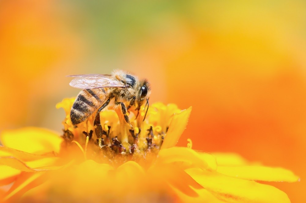 Bee stings and allergies: prevention and treatment tips