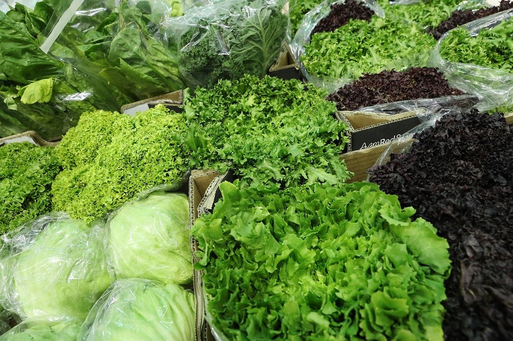 Green leafy vegetable consumption linked to slower cognitive decline