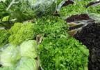 Report: CKD Does Not Preclude Plant-Based Diets