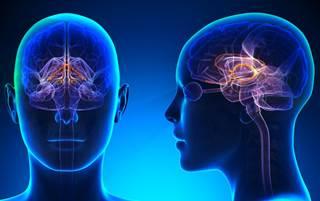 long term memory enhanced by electrical stimulation of the amygdala
