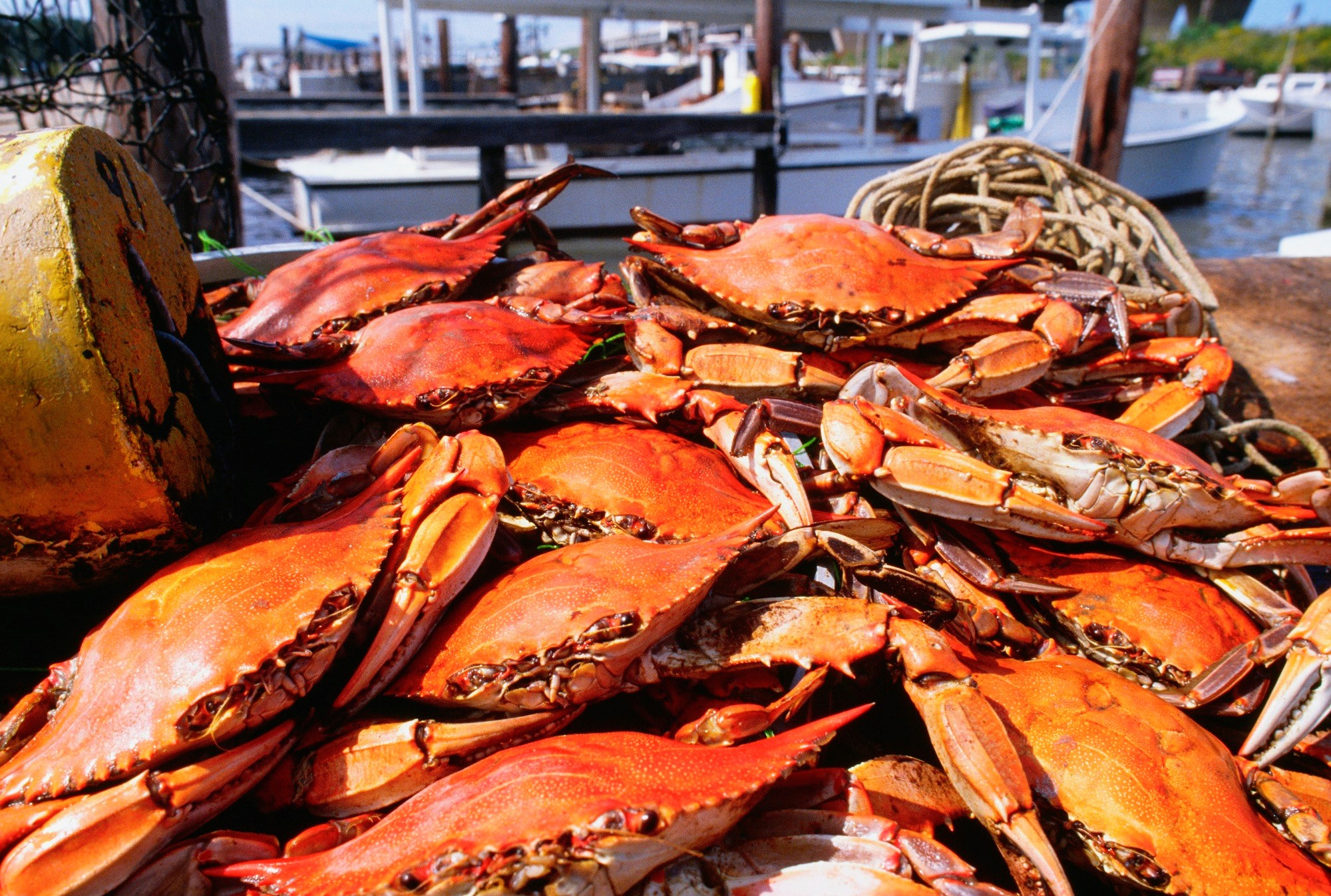 FDA: Illnesses Tied to Fresh Crab Meat Imported From Venezuela