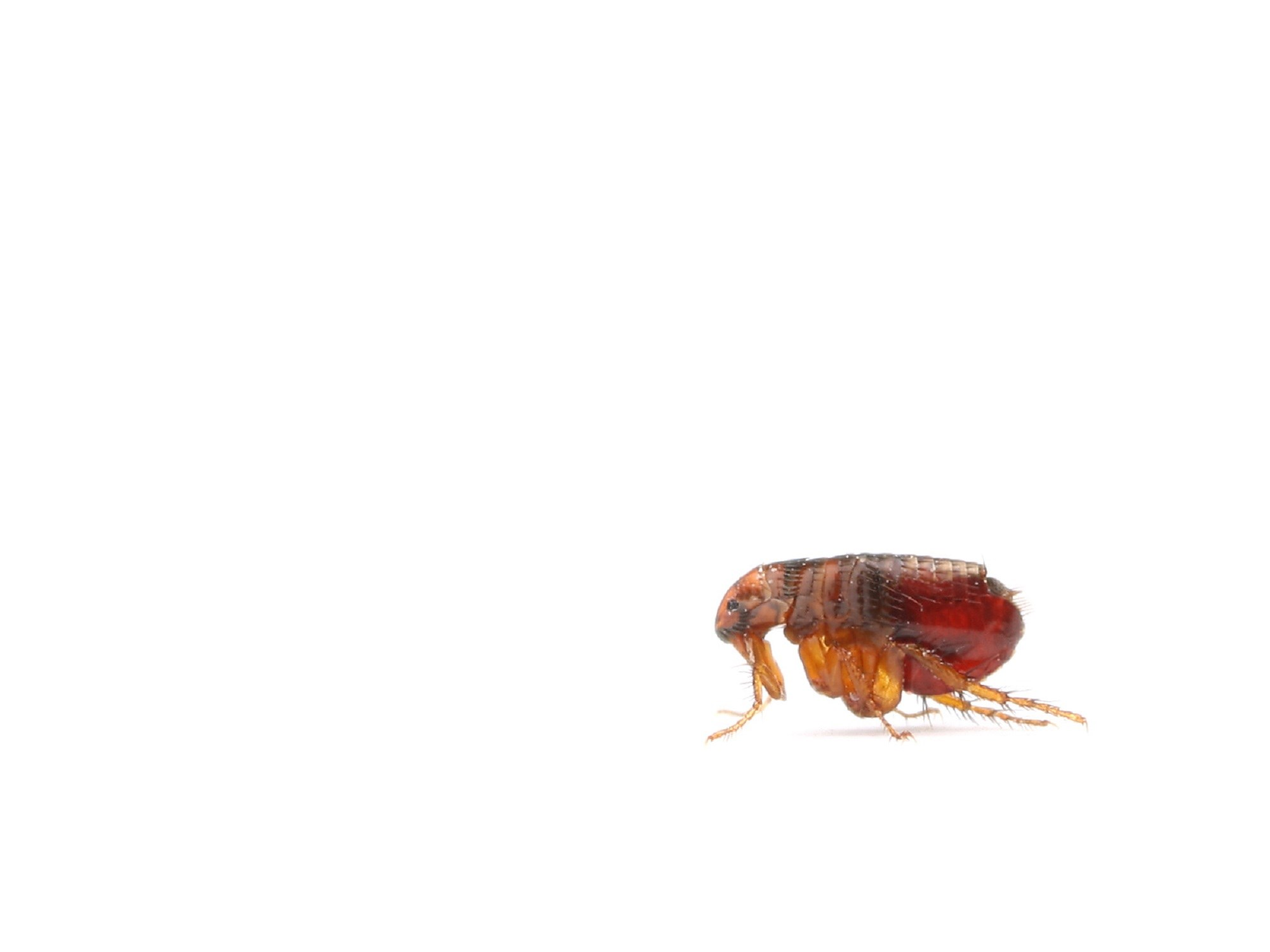 Flea-Borne Typhus Outbreak in Los Angeles County